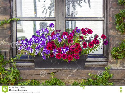 Flowering House Plants For Windows by Brick Wall With Windows And Flower Boxes With Flowering