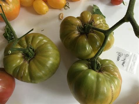 cuisiner les tomates vertes des vertes et des pas mûres les tomates smartiz