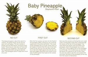 First Dissection  Baby Pineapple