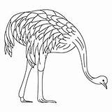 Emu Coloring Designlooter Grazing sketch template