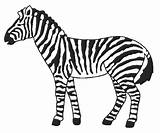 Zebra Coloring Coloringnow sketch template