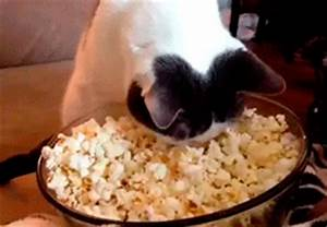 22 Adorable Animals Eating People Food - A Nice MosCATo | Guff
