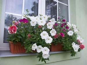 Balkonkasten Bepflanzen Südseite : balkonkasten im halbschatten diese pflanzen gedeihen hier ~ Indierocktalk.com Haus und Dekorationen