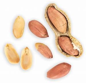 Peanut   Nine