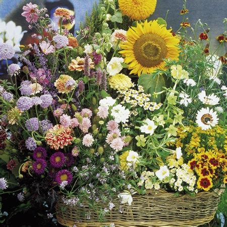Mixed Flower Seed  Cottage Garden Mixture Roceco