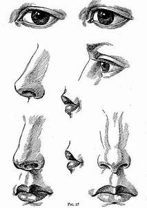 How to Draw Noses | Art - Portrait Tutorial | Pinterest ...