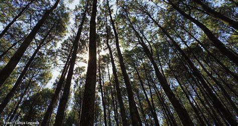 review hutan pinus mangunan spot foto kece wahana