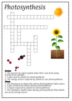 photosynthesis crossword puzzle review  interactive