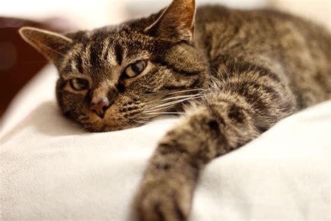 Geriatric Care  All Cat Clinic