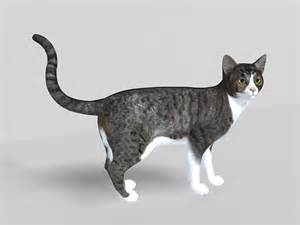 cat modeling grey tabby cat 3d model 3ds max files free