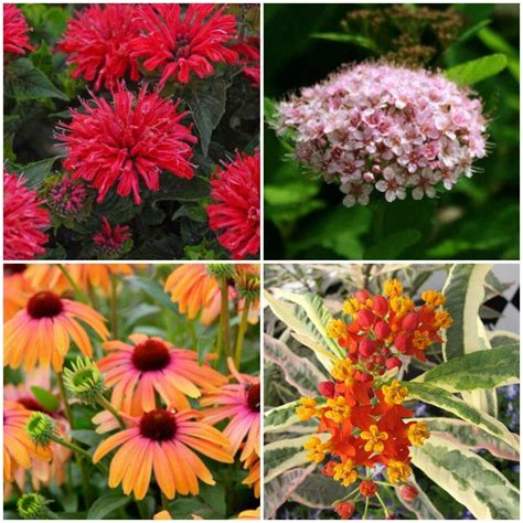 12 new bee supporting plants to plant this year mnn