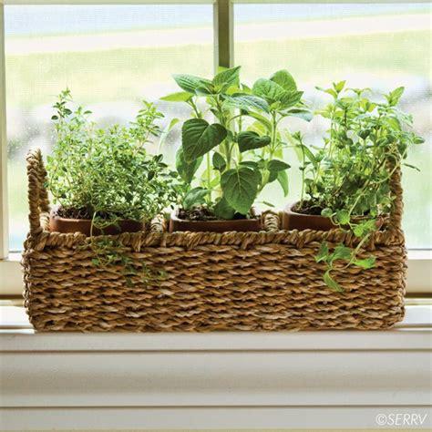 Window Sill Herb Garden Pots by Windowsill Herb Planter Three Terracotta Pots Nest Within