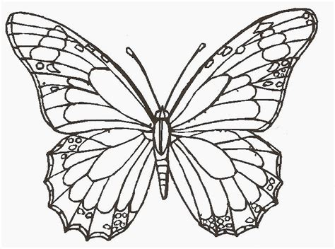 colours drawing wallpaper butterfly cartoone colour