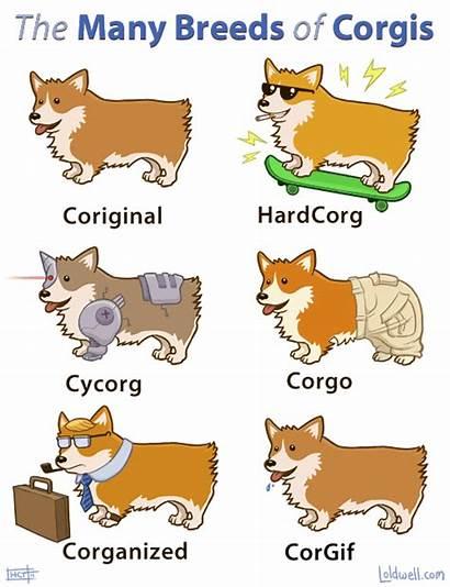 Corgis Breeds Many Corgi Types Dogs Dog