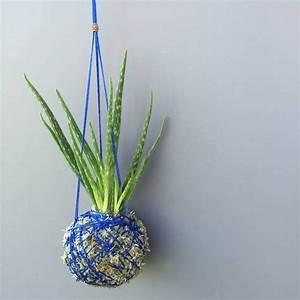 Arrosage Aloe Vera : plante succulente une le on d 39 conomie d 39 eau ~ Nature-et-papiers.com Idées de Décoration