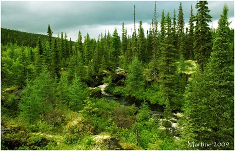 Boreal Forest Quebec Boreal Forest Climate