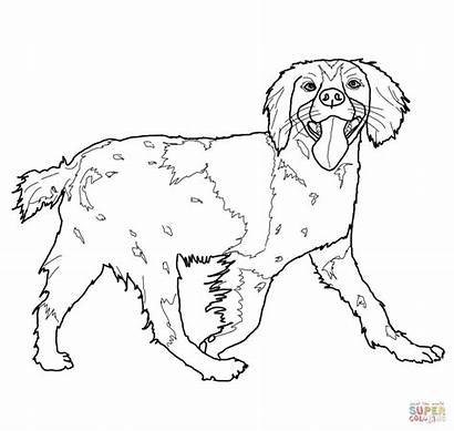 Spaniel Coloring Cocker Brittany Pages Drawing Printable