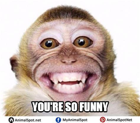 Meme Monkey - monkey meme pictures to pin on pinterest thepinsta