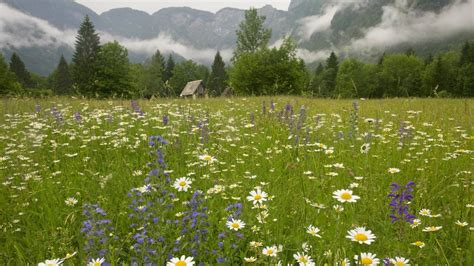 spring meadow wallpapers wallpaper cave