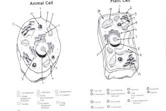 blank plant  animal cell diagram worksheet