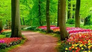 HD wallpaper Nature ·① Download free stunning High ...