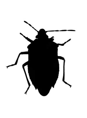 homeowners     chinch bugs south
