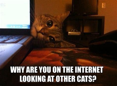 Funny Caption Memes - 30 funny animal captions part 4 30 pics amazing creatures