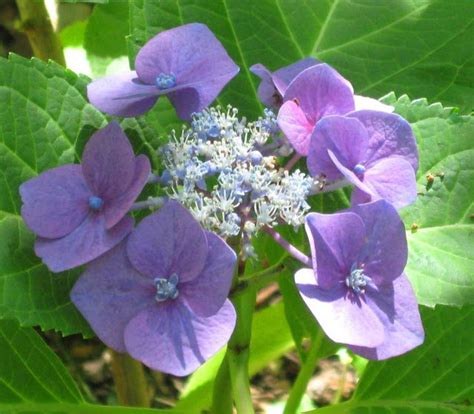 252 Best Images About Perennial Plants On Pinterest To