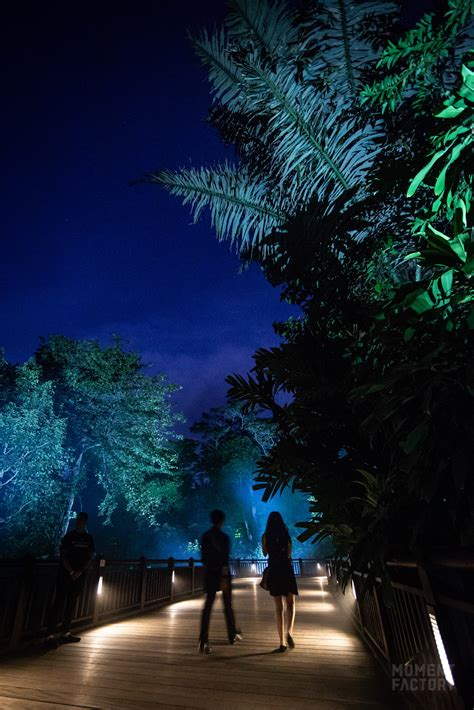 lumina rainforest factory moment singapore digitally delights attraction filled created walk wild lights amazing dark take through side opening grand