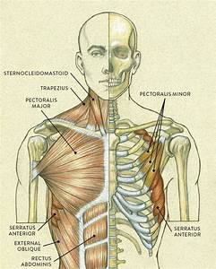 Pin By G On Anatomy Master In 2020