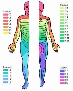 myotome and dermatome chart - Google Search | Chiropractic ...