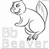 Beaver Coloring Beavers Chakiradecor North Animal Coloringfolder sketch template