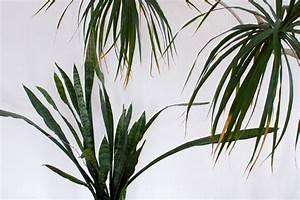 Pflanztopf Für Palmen : orchideen sukkulenten palmen ein dschungel f r zu hause ~ Lizthompson.info Haus und Dekorationen