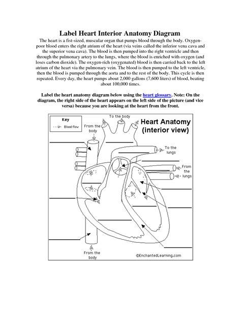 13 Best Images Of Heart Diagram Label Worksheet  Label Heart Diagram Worksheet, Teeth Diagram