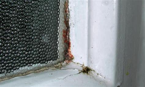 schwarzer schimmel wie entfernen mauerwerk schwarzer schimmel selbst de