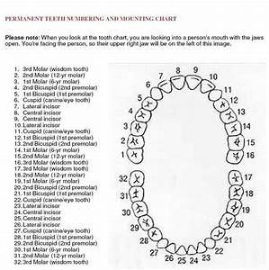 Best 25  Dental Charting Ideas On Pinterest
