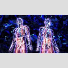 Scoperto L'interstizio, L'organo Più Grande Del Corpo Umano