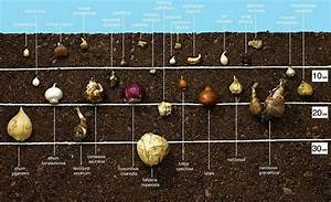 Blumenzwiebeln Richtig Setzen : jetzt blumenzwiebeln setzen schaniel gartenbau ~ Lizthompson.info Haus und Dekorationen