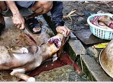 The gallery for > Dog Meat