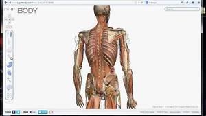 Programa En Linea Para Aprender Del Cuerpo Humano  Y Como
