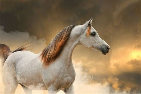 25+ Best Ideas About Most Beautiful Horses On Pinterest Beautiful Glass Coffee Tables Cake Eggless Recipe Alton Brown Pudding And Walnut Buttercream Do Scratch Easily Jam