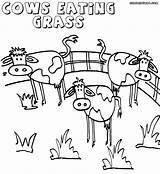 Grass Coloring Pages Colorings Grass2 Coloringway sketch template