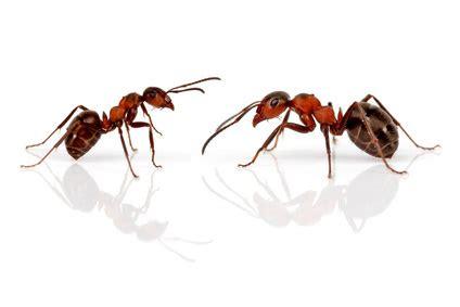 natron gegen ameisen kochen und backen