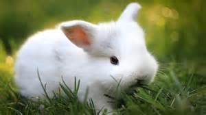 How Bathe Hamster Photo
