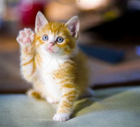 Cutest Little Ginger Kitten « Cute And Funny Pet Photos Of