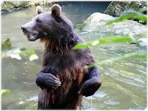Tierpark Bad Mergentheim : bei den braunb ren im tierpark bad mergentheim ~ Watch28wear.com Haus und Dekorationen