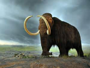 woolly mammoth autopsy and cloning business insider