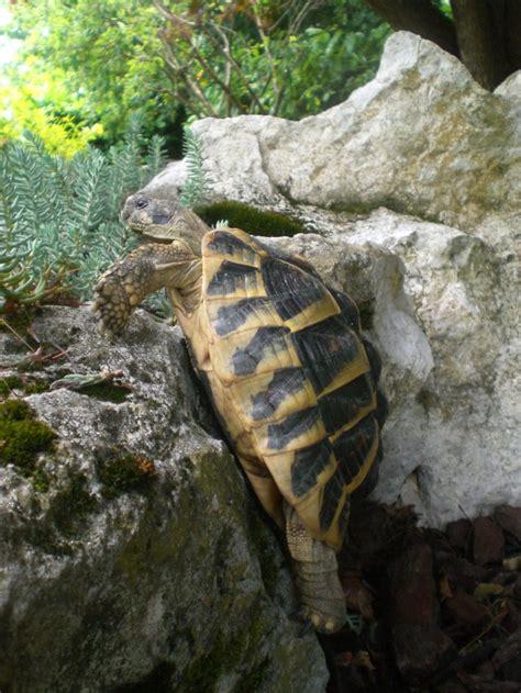le pour tortue terrestre quelles plantes grasses