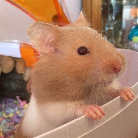 Hamster Trails Youtube