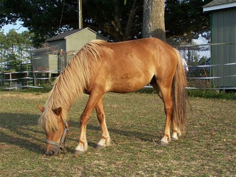 horses shackleford adoption soprano six awaiting nps calo gov